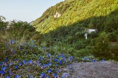 Paesaggio del ` s della montagna con i fiori blu Fotografia Stock Libera da Diritti