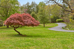Paesaggio del santuario di Woodend - HDR Fotografia Stock