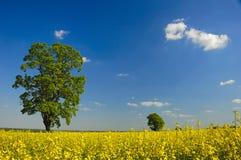 Paesaggio del seme di ravizzone Fotografie Stock