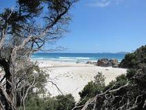 Paesaggio del sud australiano della costa con le piante indigene Fotografia Stock Libera da Diritti
