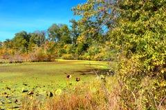 Paesaggio del sud della zona umida di Illinois Immagine Stock