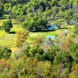 Paesaggio del sud della zona umida di Illinois Fotografia Stock