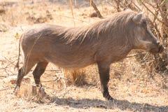 Paesaggio del Sudafrica e fauna selvatica 1 Fotografie Stock
