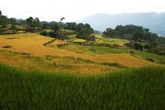 Paesaggio del Sulawesi Immagini Stock
