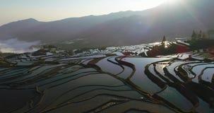 Paesaggio del terrazzo del riso con le risaie riempite di acqua stock footage