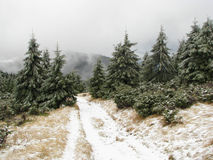 Paesaggio del terreno boscoso. Fotografie Stock