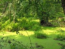 Paesaggio del terreno boscoso Fotografia Stock Libera da Diritti