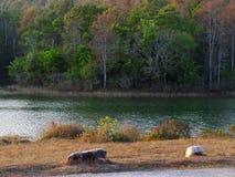 Paesaggio del terreno boscoso e del reservior sulla montagna Fotografia Stock