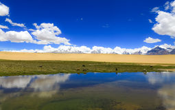 Paesaggio del Tibet fotografia stock libera da diritti