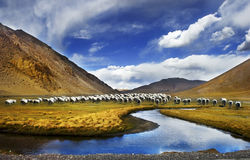 Paesaggio del Tibet della Cina Immagine Stock Libera da Diritti