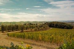Paesaggio del Toscano Fotografie Stock Libere da Diritti
