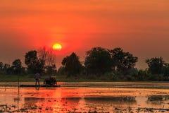 Paesaggio del tramonto e di agricoltura con il trattore mini Immagine Stock