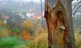 paesaggio del tronco di albero nella foresta fotografia stock