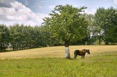 Paesaggio del villaggio Immagine Stock Libera da Diritti