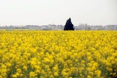 Paesaggio del villaggio cinese Fotografie Stock Libere da Diritti