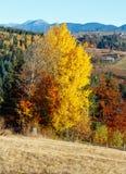 Paesaggio del villaggio di Autumn Carpathian, Ucraina Immagini Stock Libere da Diritti