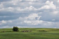 Paesaggio del villaggio di estate con il cielo delle nuvole Fotografie Stock Libere da Diritti