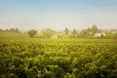 Paesaggio del vino fotografie stock
