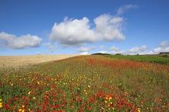 Paesaggio del Wildflower Fotografia Stock