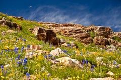 Paesaggio del Wildflower con la luna Fotografia Stock Libera da Diritti