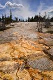 Paesaggio del Yellowstone Fotografie Stock