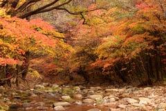Paesaggio dell'acero di autunno Immagine Stock Libera da Diritti