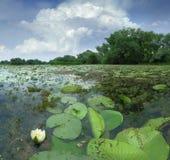 Paesaggio dell'acqua di luglio Fotografia Stock Libera da Diritti