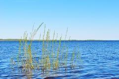 Paesaggio dell'acqua sorgiva - fiume di Volchov vicino al lago Ilmen con i rami sommersi sulla priorità alta Immagini Stock Libere da Diritti