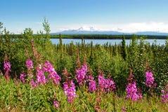 Paesaggio dell'Alaska Fotografie Stock