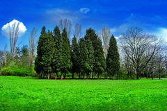 Paesaggio dell'albero Fotografia Stock