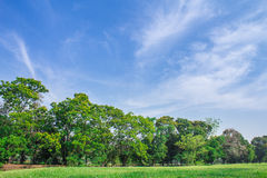 Paesaggio dell'albero Immagini Stock Libere da Diritti