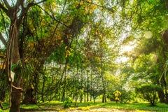Paesaggio dell'albero Immagine Stock Libera da Diritti