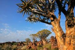 Paesaggio dell'albero del fremito Fotografia Stock Libera da Diritti