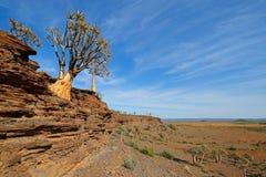 Paesaggio dell'albero del fremito Fotografia Stock