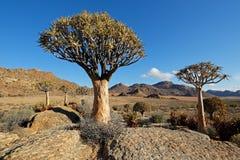 Paesaggio dell'albero del fremito Immagini Stock Libere da Diritti