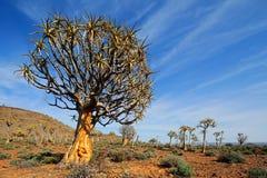 Paesaggio dell'albero del fremito Immagine Stock