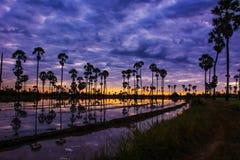 Paesaggio dell'albero nel tempo crepuscolare, Tailandia della palma da zucchero immagini stock
