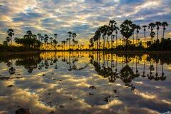 Paesaggio dell'albero nel tempo crepuscolare, Tailandia della palma da zucchero fotografia stock libera da diritti