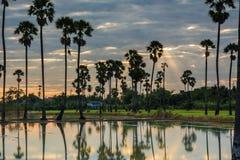 Paesaggio dell'albero nel tempo crepuscolare, Tailandia della palma da zucchero immagine stock libera da diritti