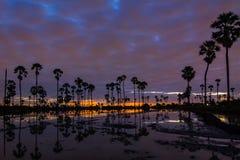 Paesaggio dell'albero nel tempo crepuscolare, Tailandia della palma da zucchero immagine stock