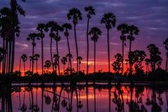 Paesaggio dell'albero nel tempo crepuscolare, Tailandia della palma da zucchero fotografie stock libere da diritti