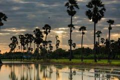 Paesaggio dell'albero nel tempo crepuscolare, Tailandia della palma da zucchero fotografia stock