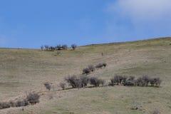 Paesaggio dell'allevamento di pecore in Southland Nuova Zelanda Immagine Stock Libera da Diritti