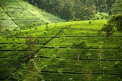 Paesaggio dell'alpeggio, Sri Lanka Fotografie Stock Libere da Diritti