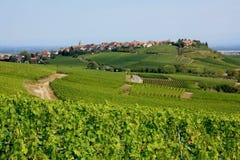 Paesaggio dell'Alsazia Fotografie Stock