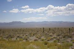 Paesaggio dell'americano del deserto Fotografia Stock