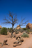 Paesaggio dell'americano del deserto Immagini Stock