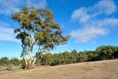 Paesaggio dell'australiano outback Immagine Stock Libera da Diritti