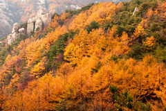Paesaggio dell'autunno della montagna di Laoshan bello della Cina immagine stock libera da diritti