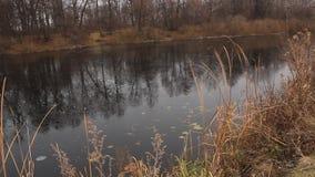 Paesaggio dell'autunno tardo con un vecchio salice sulla banca innevata di un lago congelato video d archivio